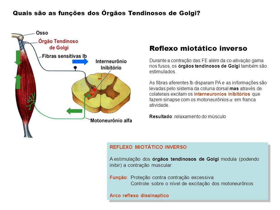 - Reflexo miotático inverso