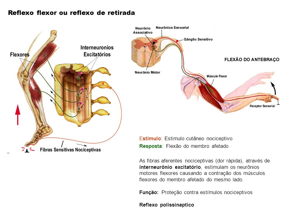 Reflexo flexor ou reflexo de retirada