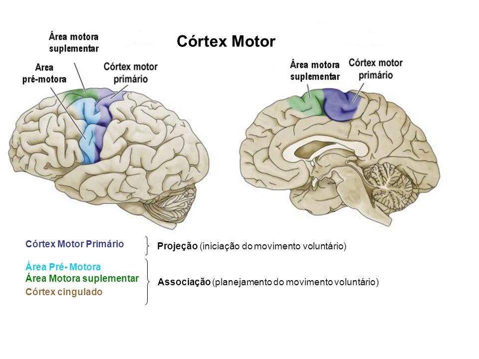 Córtex Motor Córtex Motor Primário