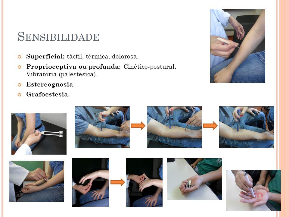 Sensibilidade Superficial: táctil, térmica, dolorosa.