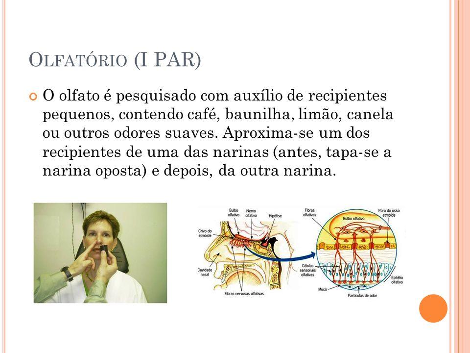 Olfatório (I PAR)
