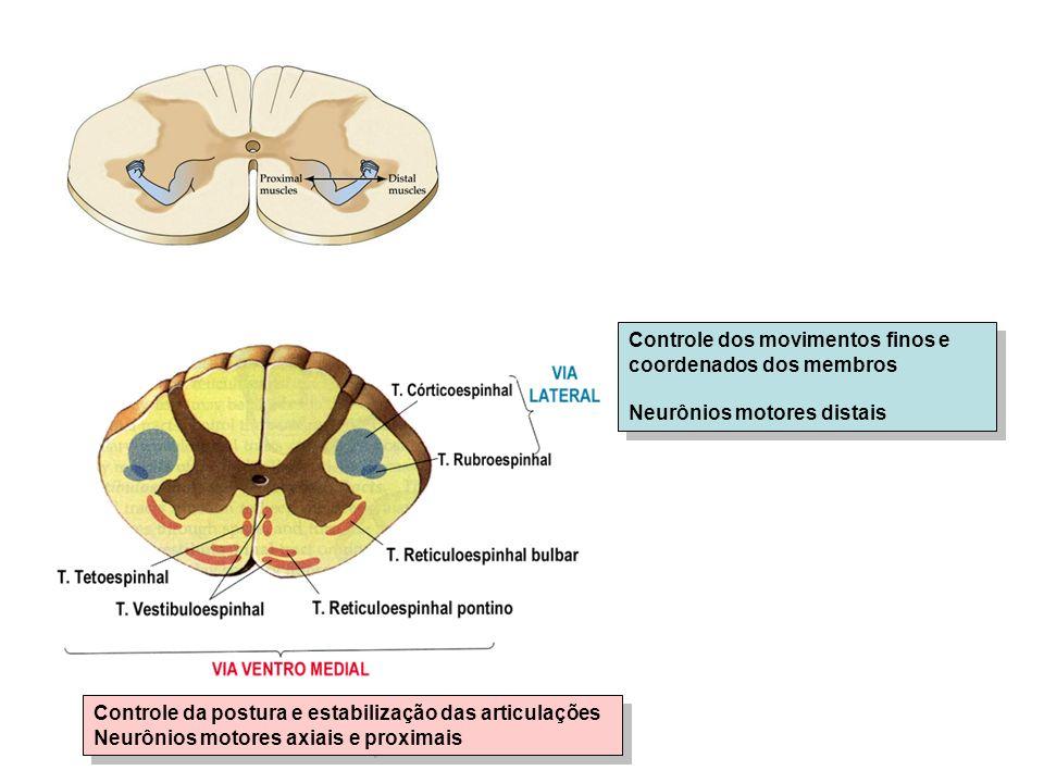 Controle dos movimentos finos e coordenados dos membros