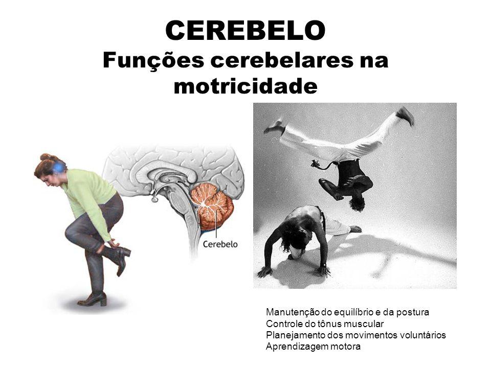 CEREBELO Funções cerebelares na motricidade