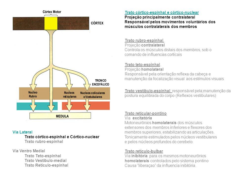 Trato córtico-espinhal e córtico-nuclear