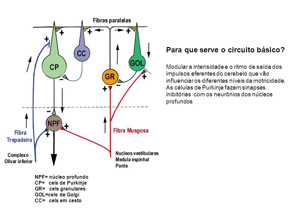 Para que serve o circuito básico