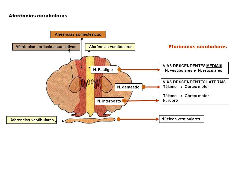 Aferências corticais associativas