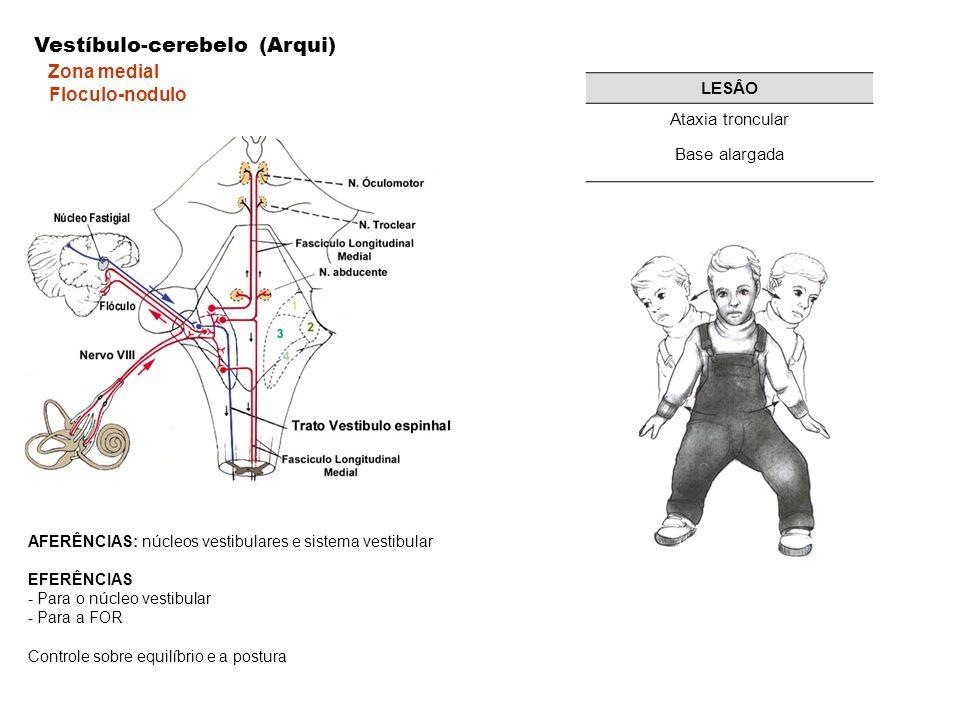 Vestíbulo-cerebelo (Arqui) Zona medial