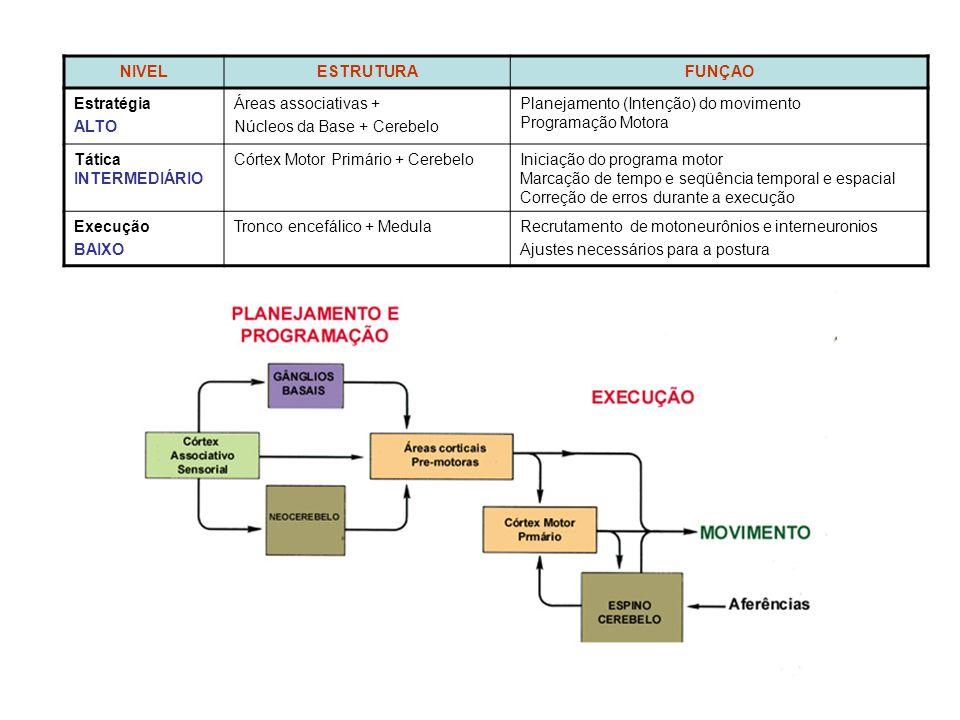 NIVEL ESTRUTURA. FUNÇAO. Estratégia. ALTO. Áreas associativas + Núcleos da Base + Cerebelo. Planejamento (Intenção) do movimento.