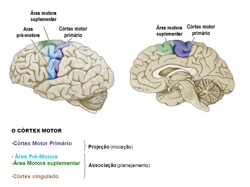 Área Motora suplementar Córtex cingulado