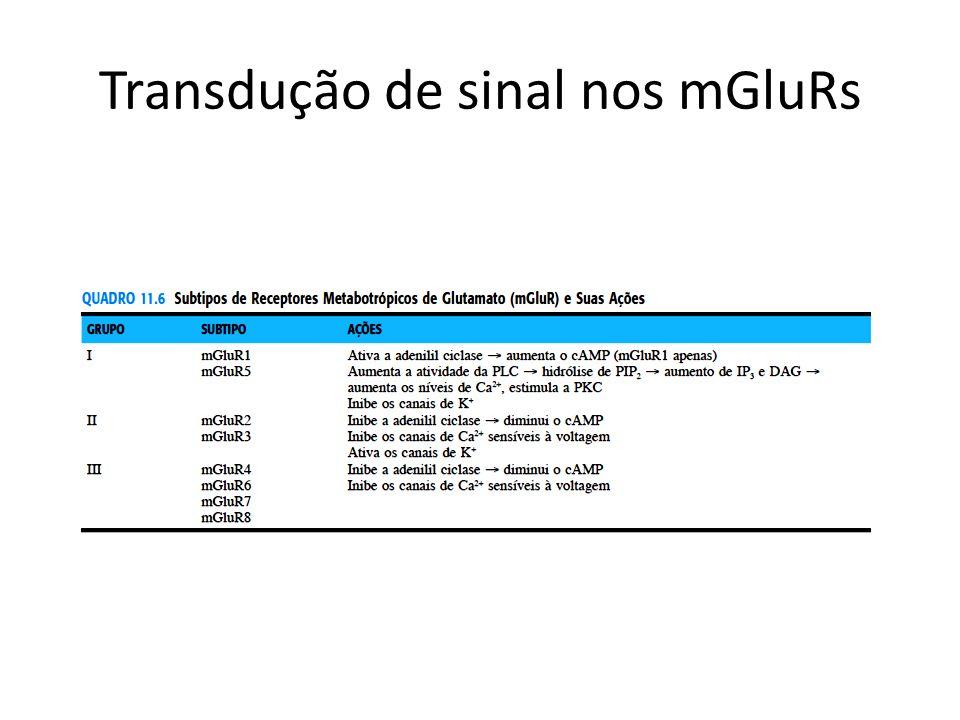 Transdução de sinal nos mGluRs
