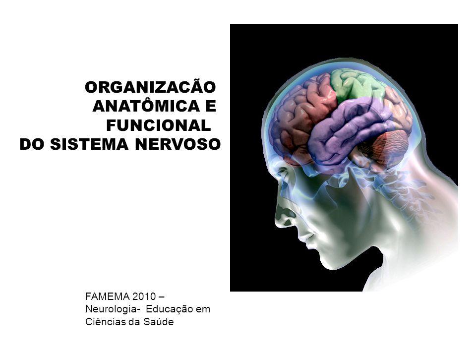 ORGANIZACÃO ANATÔMICA E FUNCIONAL DO SISTEMA NERVOSO