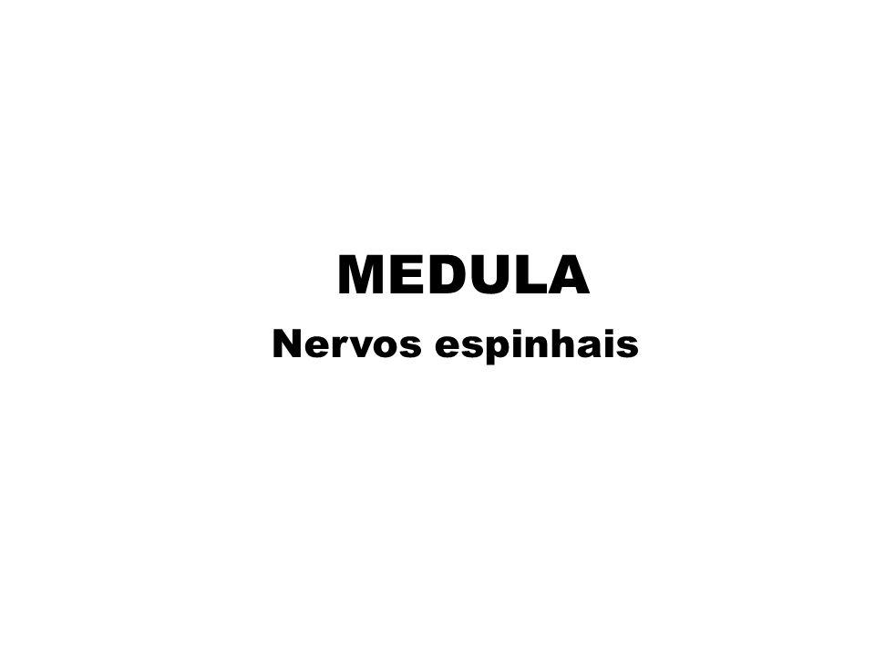 MEDULA Nervos espinhais
