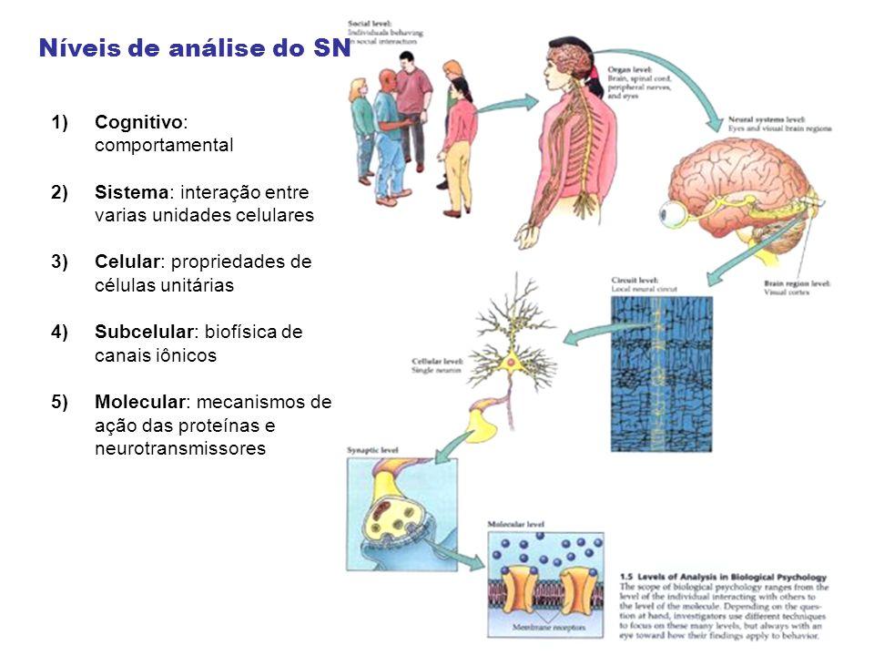 Níveis de análise do SN Cognitivo: comportamental