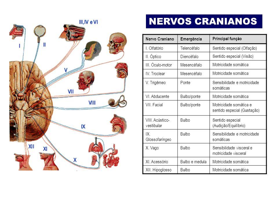 NERVOS CRANIANOS Nervo Craniano Emergência Principal função