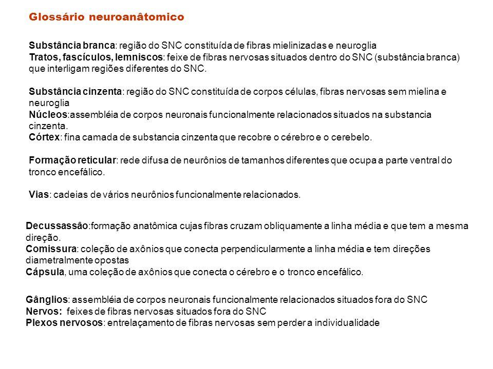 Glossário neuroanâtomico