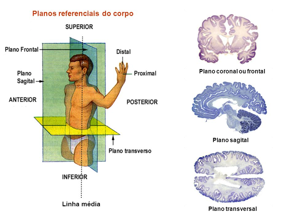 Planos referenciais do corpo