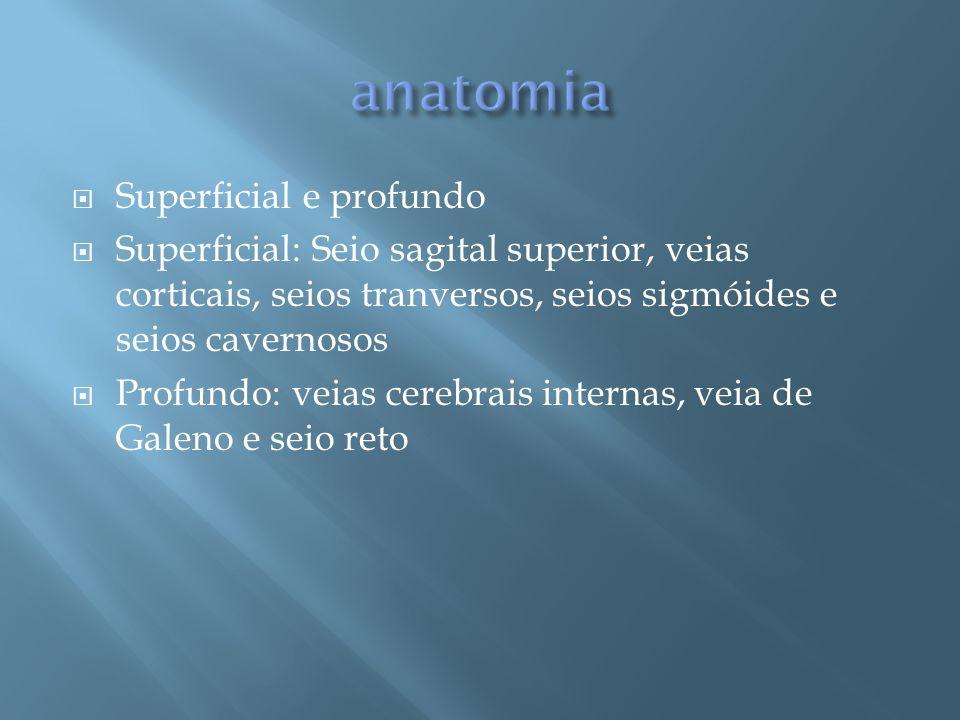 anatomia Superficial e profundo