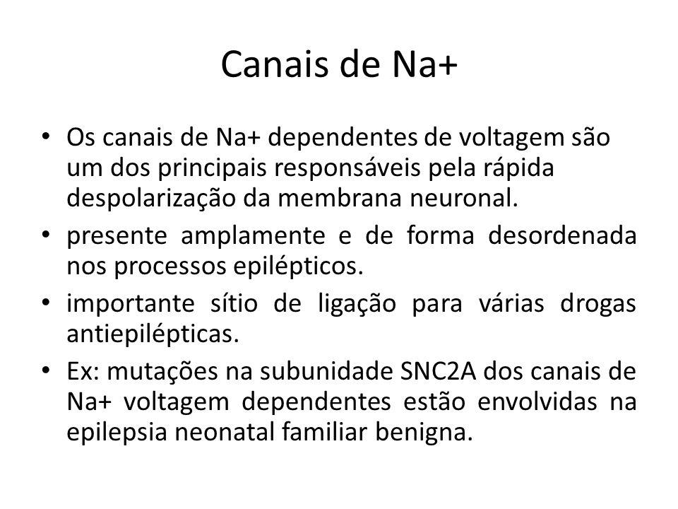 Canais de Na+ Os canais de Na+ dependentes de voltagem são um dos principais responsáveis pela rápida despolarização da membrana neuronal.