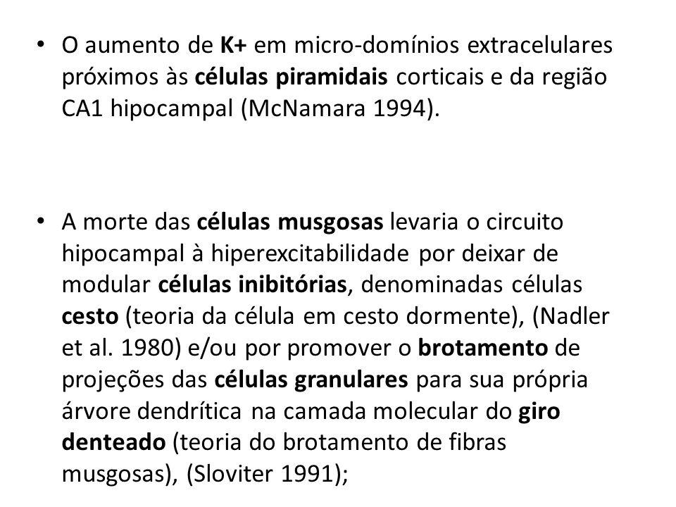 O aumento de K+ em micro-domínios extracelulares próximos às células piramidais corticais e da região CA1 hipocampal (McNamara 1994).