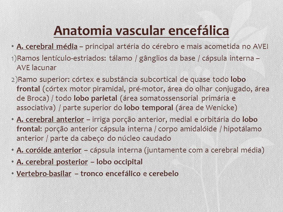 Anatomia vascular encefálica
