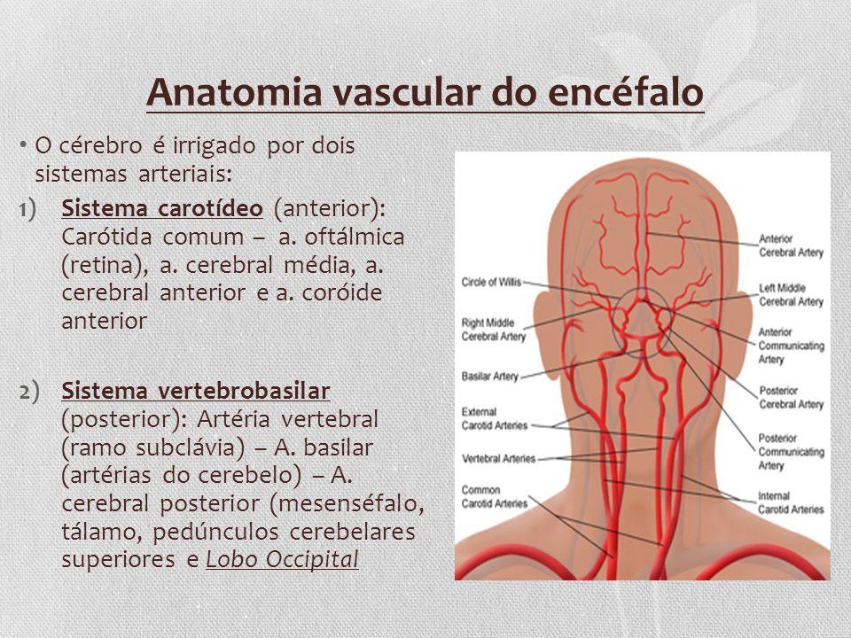 Anatomia vascular do encéfalo