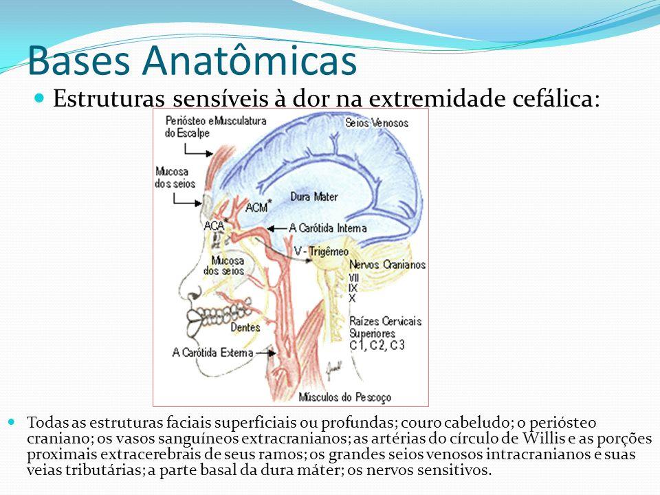 Bases Anatômicas Estruturas sensíveis à dor na extremidade cefálica: