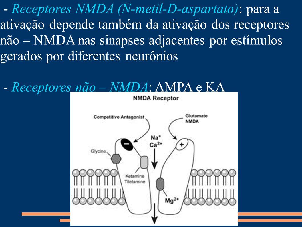 - Receptores NMDA (N-metil-D-aspartato): para a ativação depende também da ativação dos receptores não – NMDA nas sinapses adjacentes por estímulos gerados por diferentes neurônios