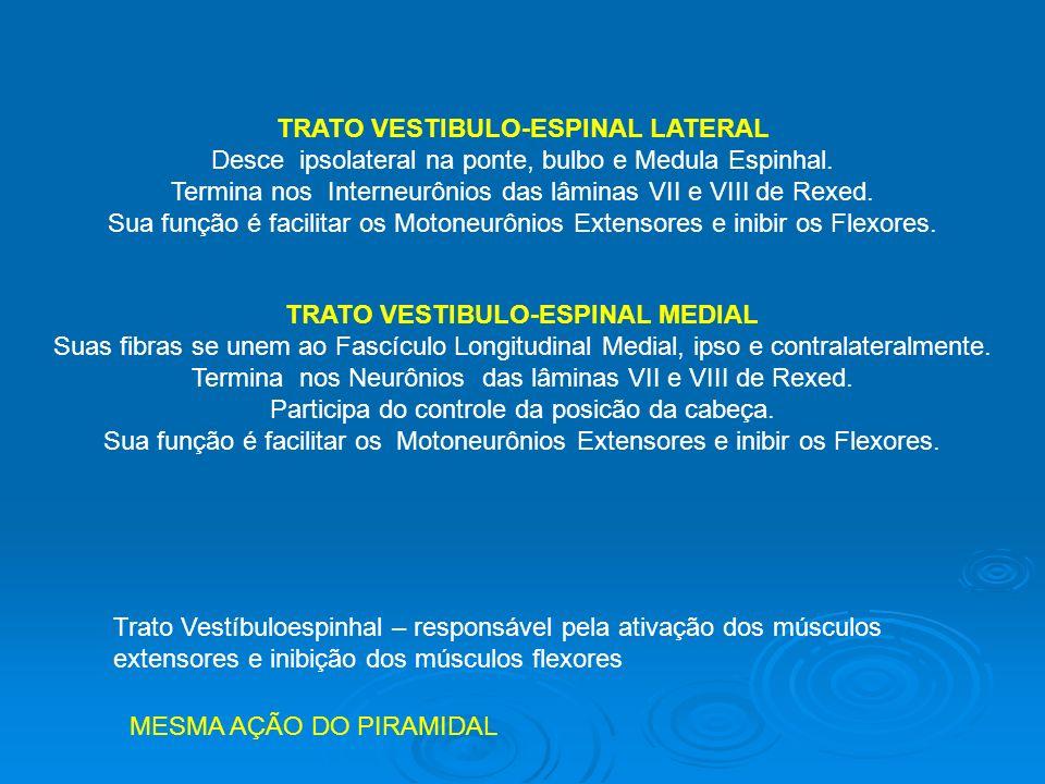 TRATO VESTIBULO-ESPINAL LATERAL
