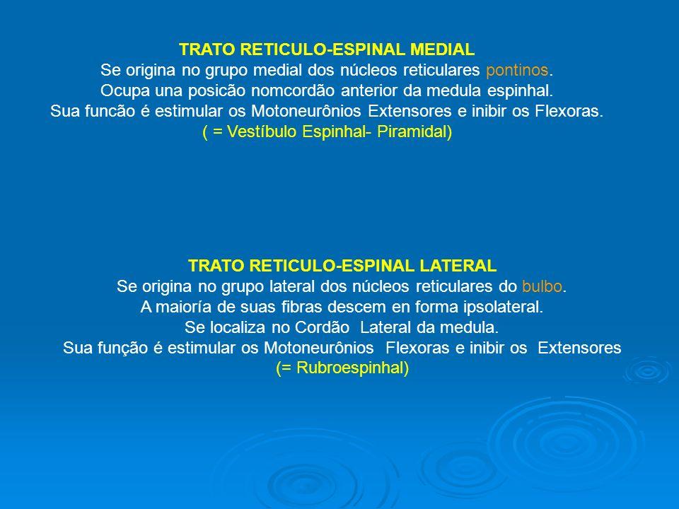 TRATO RETICULO-ESPINAL MEDIAL