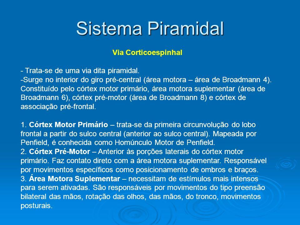 Sistema Piramidal Via Corticoespinhal