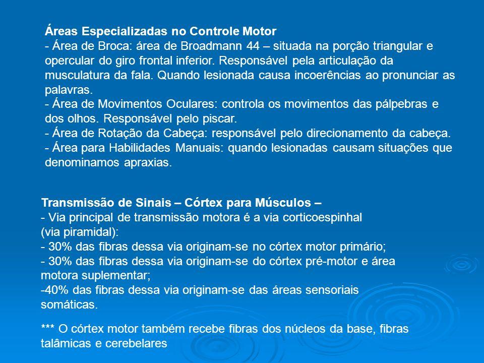 Áreas Especializadas no Controle Motor