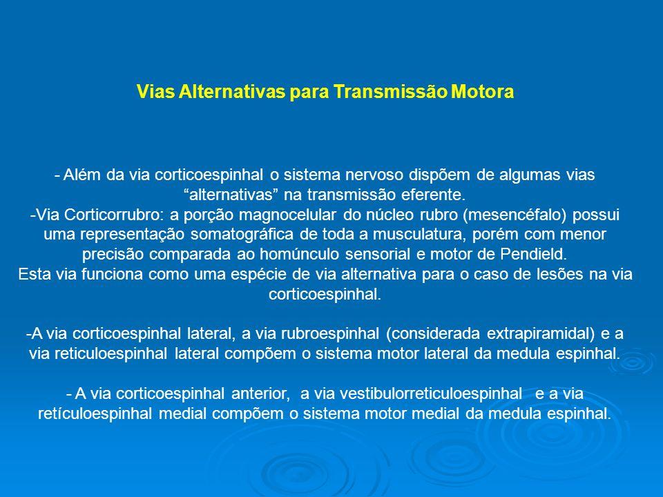 Vias Alternativas para Transmissão Motora