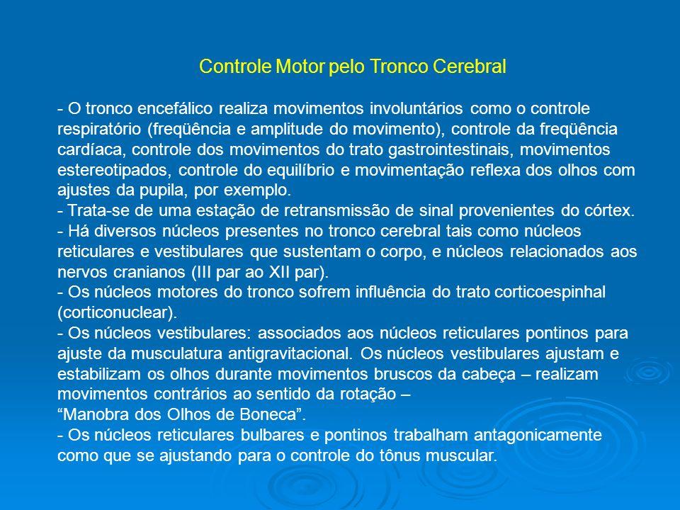 Controle Motor pelo Tronco Cerebral