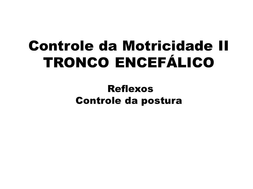 Controle da Motricidade II TRONCO ENCEFÁLICO Reflexos Controle da postura