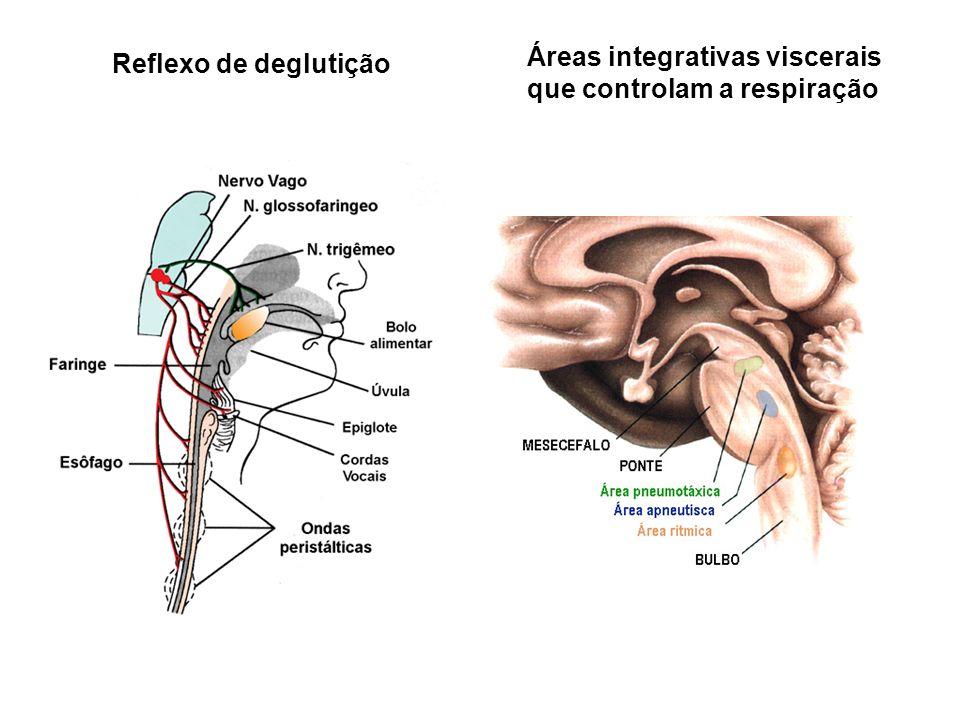 Áreas integrativas viscerais que controlam a respiração