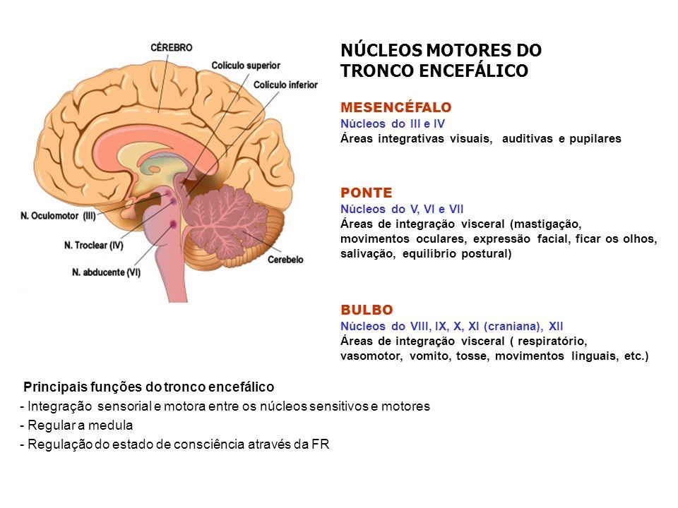 NÚCLEOS MOTORES DO TRONCO ENCEFÁLICO MESENCÉFALO PONTE BULBO