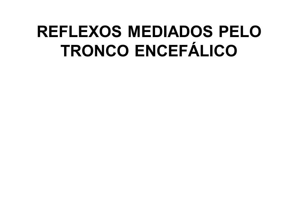 REFLEXOS MEDIADOS PELO TRONCO ENCEFÁLICO