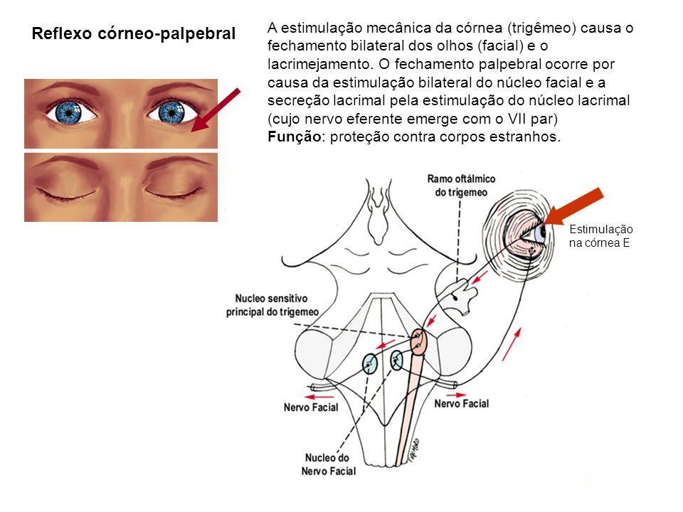 Reflexo córneo-palpebral