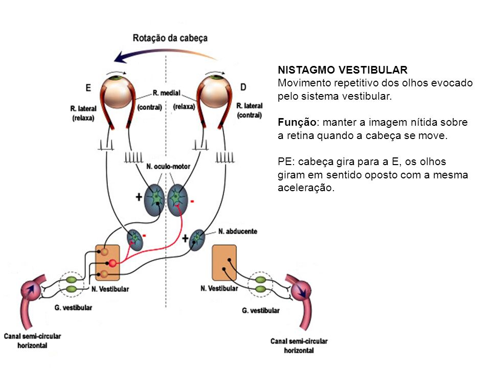 NISTAGMO VESTIBULAR Movimento repetitivo dos olhos evocado pelo sistema vestibular.