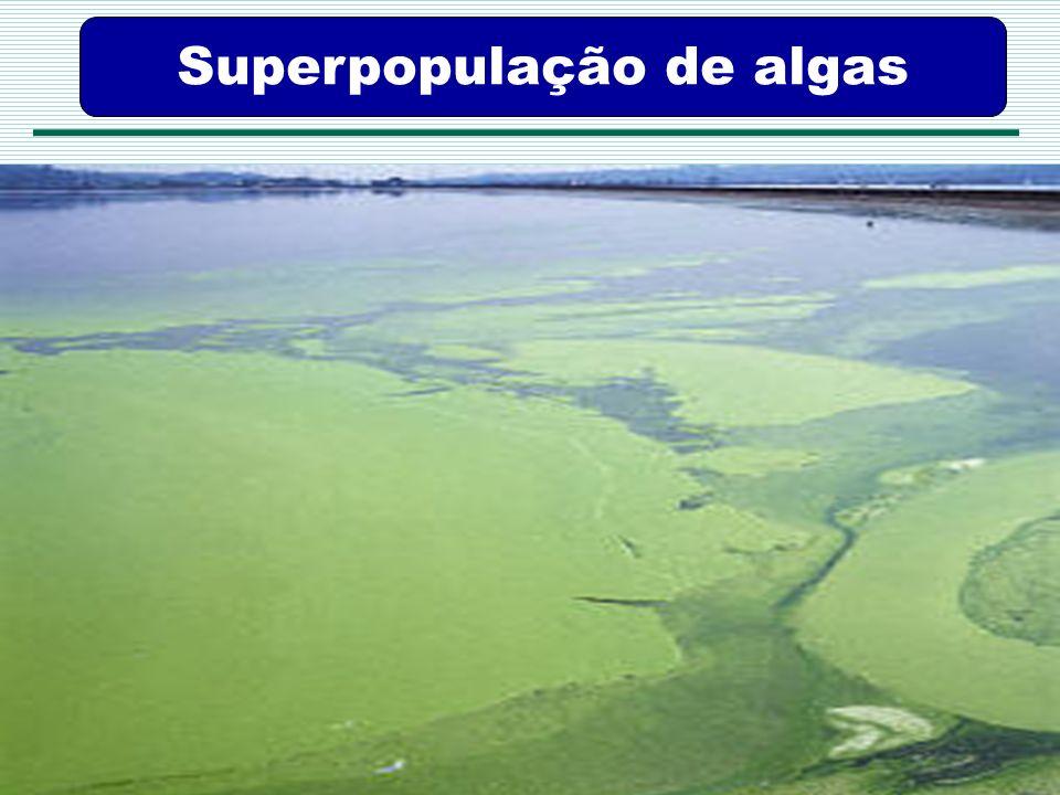 Superpopulação de algas