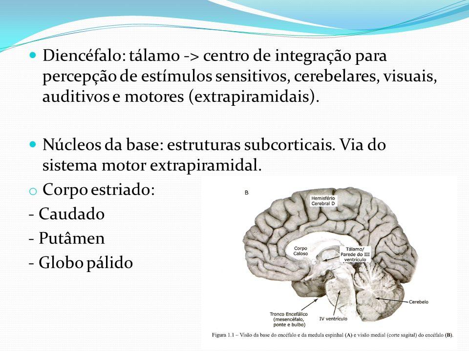 Diencéfalo: tálamo -> centro de integração para percepção de estímulos sensitivos, cerebelares, visuais, auditivos e motores (extrapiramidais).