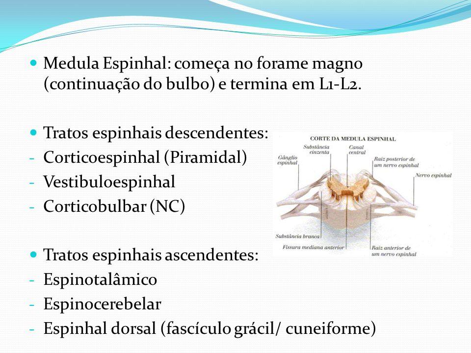 Medula Espinhal: começa no forame magno (continuação do bulbo) e termina em L1-L2.
