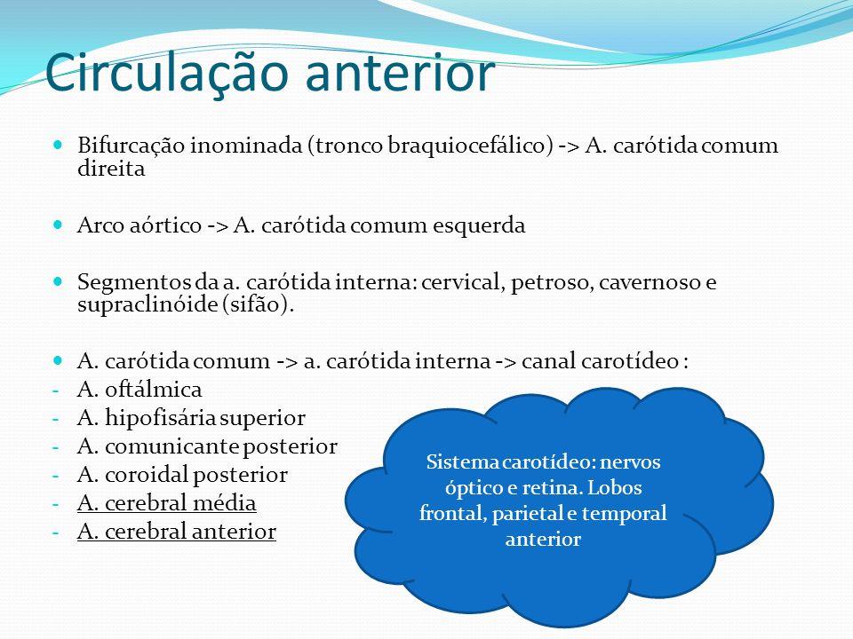 Circulação anterior Bifurcação inominada (tronco braquiocefálico) -> A. carótida comum direita. Arco aórtico -> A. carótida comum esquerda.