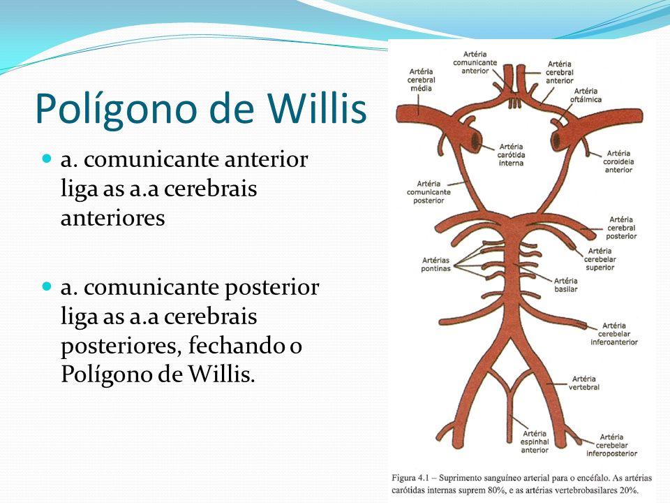 Polígono de Willisa. comunicante anterior liga as a.a cerebrais anteriores.