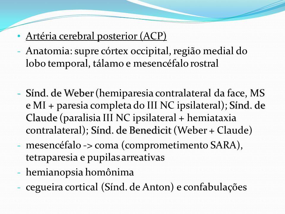 Artéria cerebral posterior (ACP)