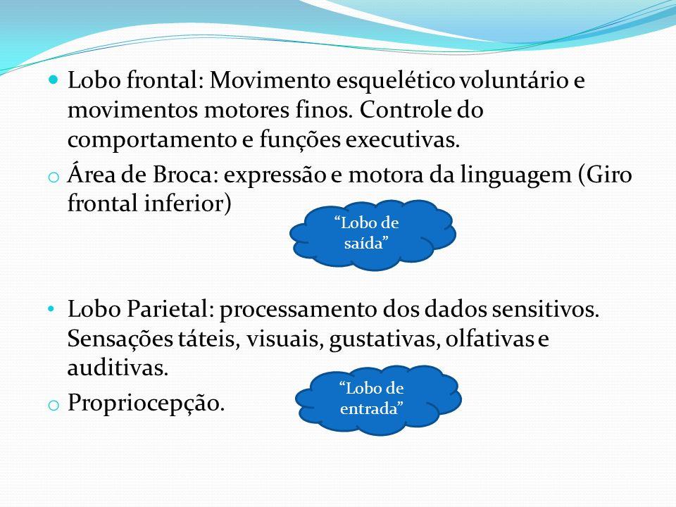 Área de Broca: expressão e motora da linguagem (Giro frontal inferior)