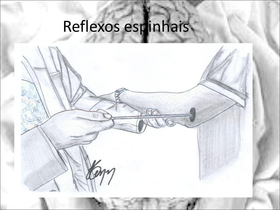 Reflexos espinhais