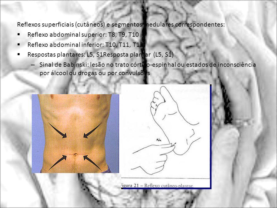 Reflexos superficiais (cutâneos) e segmentos medulares correspondentes: