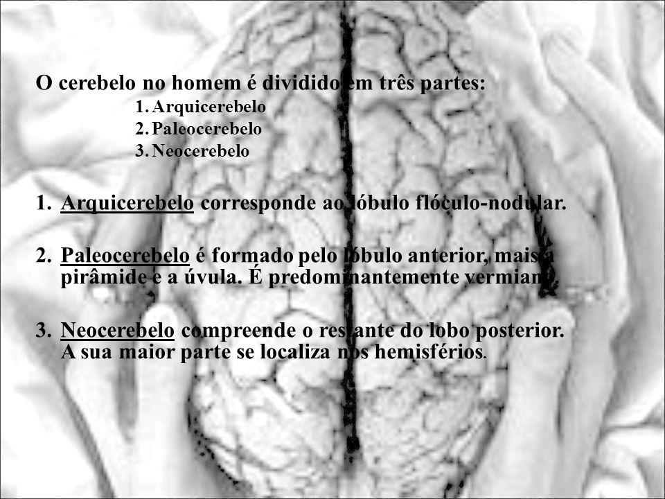 O cerebelo no homem é dividido em três partes: