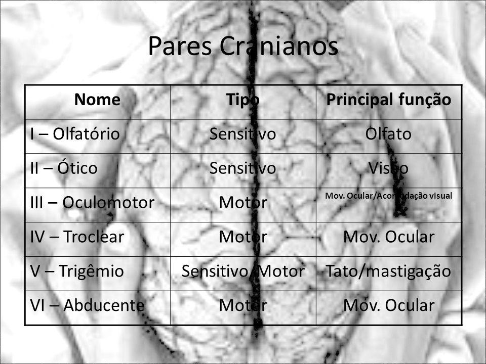 Mov. Ocular/Acomodação visual
